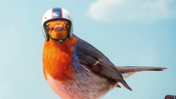 Foto av fugl med hjelm